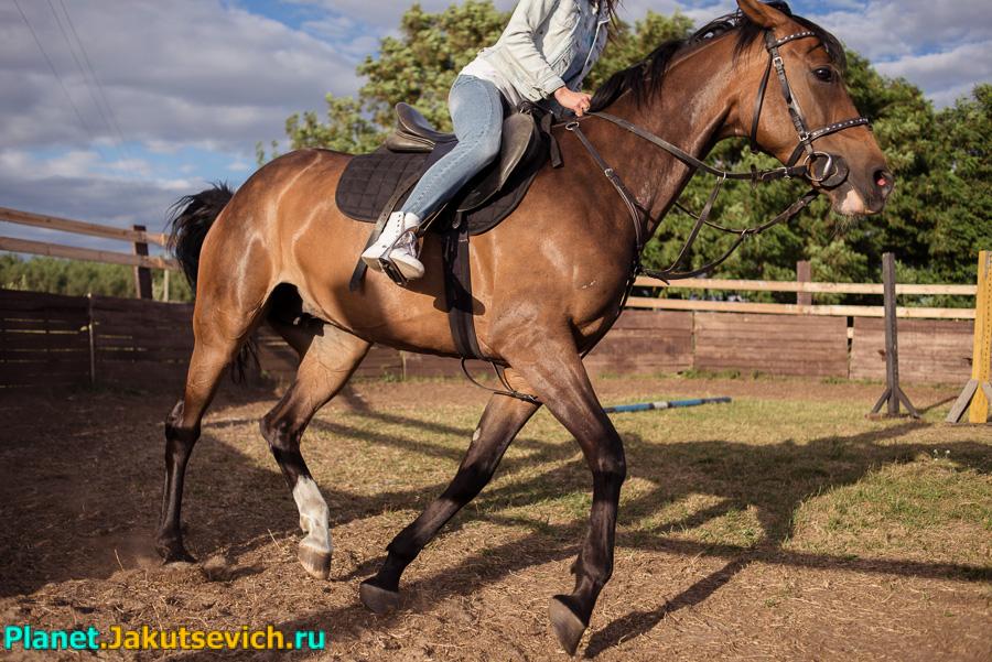 катание на лошадях в Бресте фото отчет