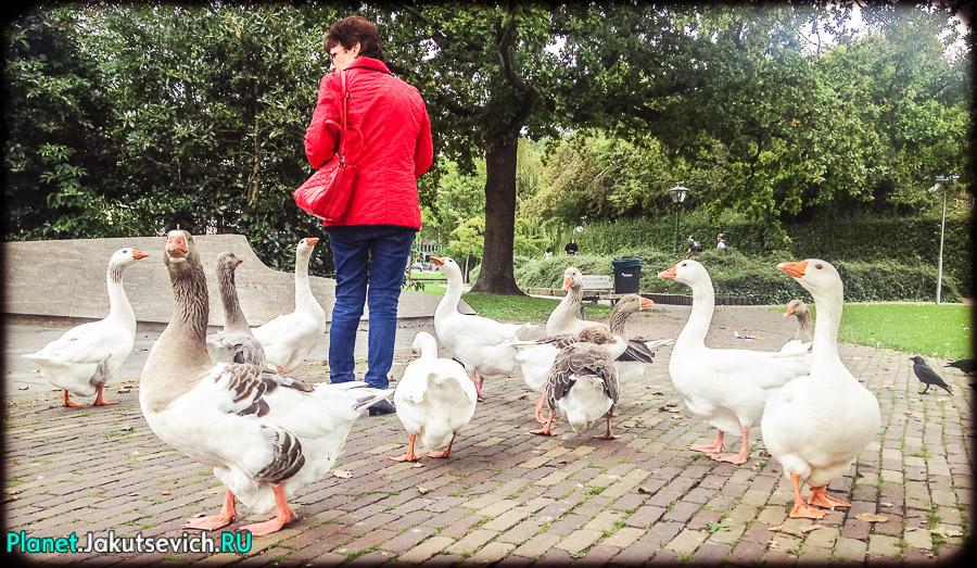 Лейден-Голландия-фото_сентябрь-2104-04